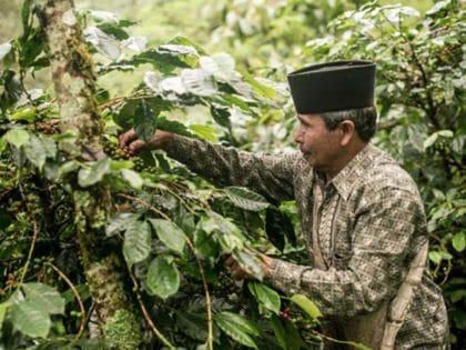 Nachhaltig produzierte Werbeartikel für Orang Utan Coffee